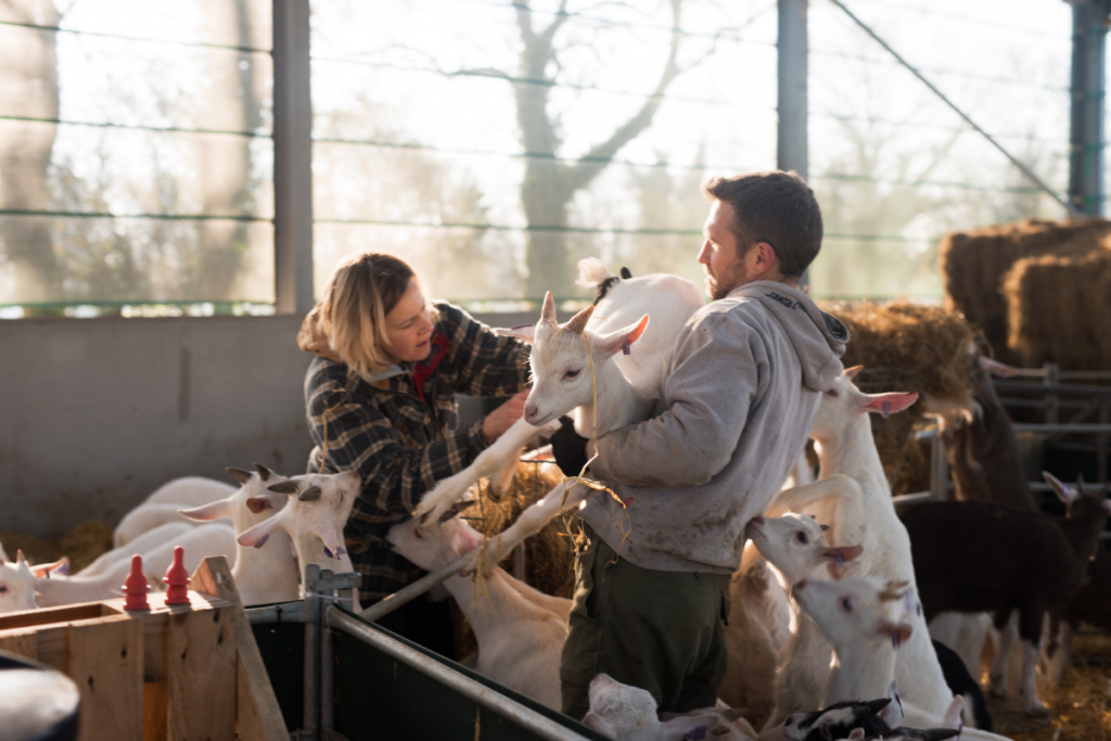 Goat Keeping Course, Goat Keeping, Rearing Goats, Kid Goat Course, Smallholding Course